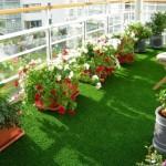 Cỏ trang trí – cỏ sân vườn
